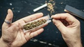 IMG What are the neurological effects of mixing cannabis with tobacco?