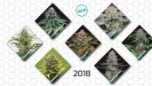 IMG New 2018 cannabis strains