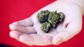IMG Buying cannabis from shops? The international legal status of CBD