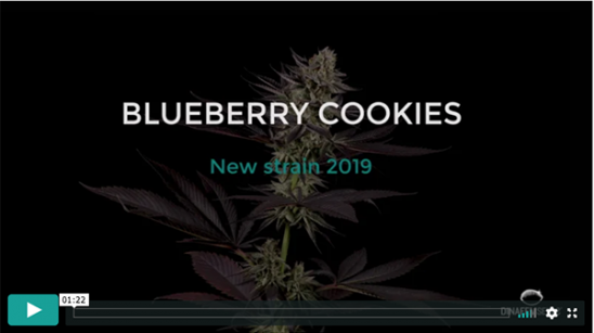 Video Blueberry Cookies