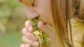 IMG What is myrcene?