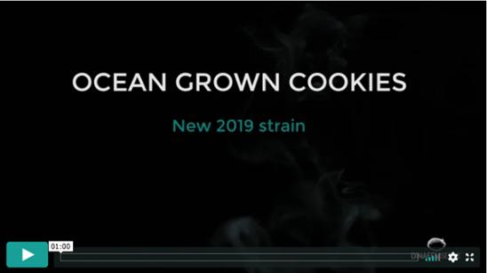 Video Ocean Grown Cookies